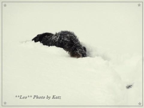 20140119 Leo (11)