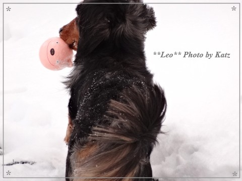 20140126 Leo (9)