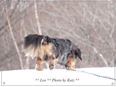 20140202 Leo (4)