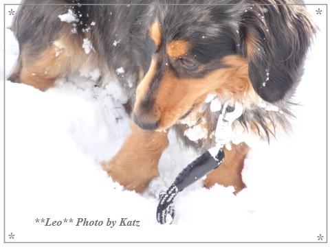 20140223 Leo (9)