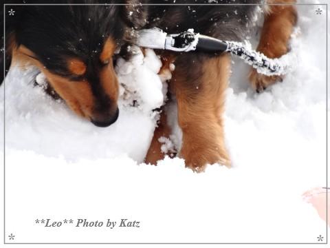 20140223 Leo (11)