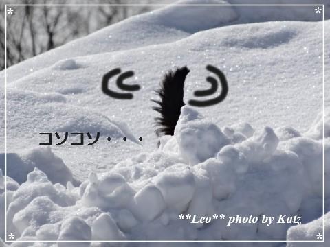 20140313 Leo (9)