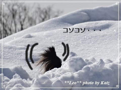 20140313 Leo (10)
