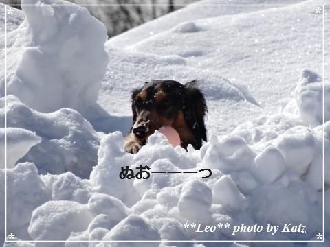 20140313 Leo (11)