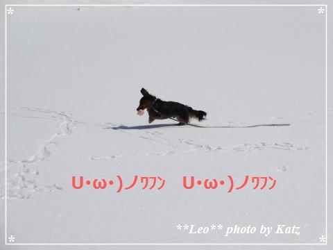 20140313 Leo (16)