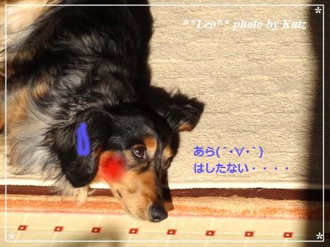 20140430 Leo (2)