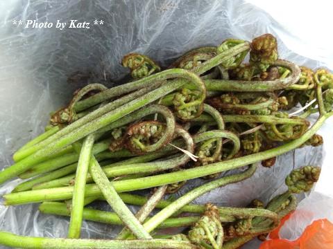 20140515 山菜 (2)