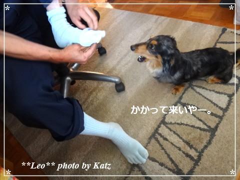 20140610 Leo (3)