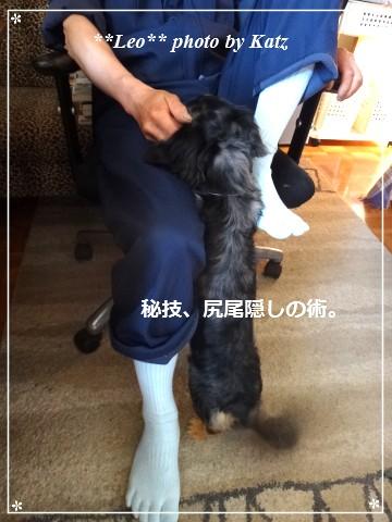20140610 Leo (5)