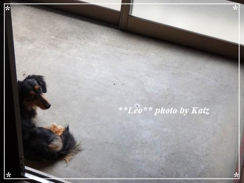 20140708 Leo (2)