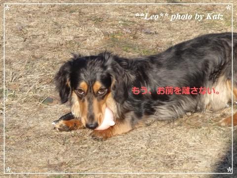 20140413 Leo (3)