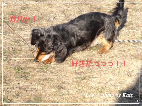 20140413 Leo (4)