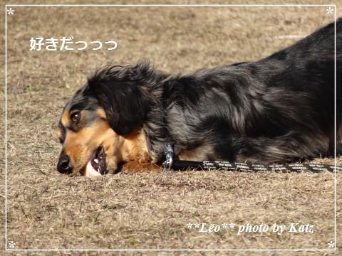 20140413 Leo (9)