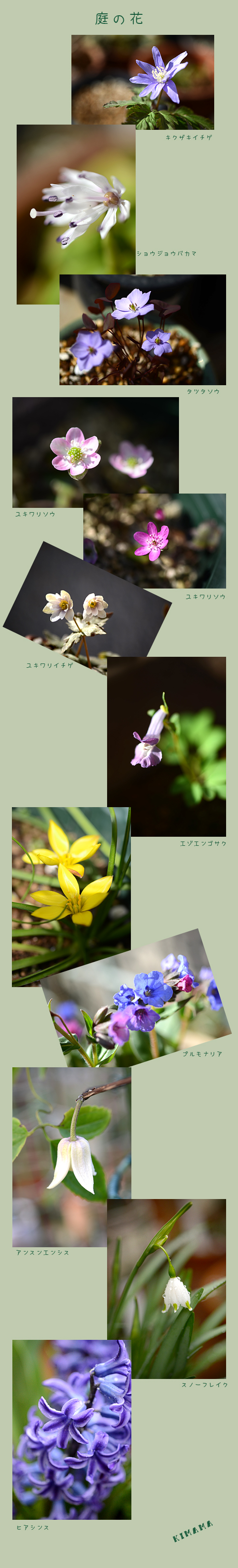 4月4日山野草