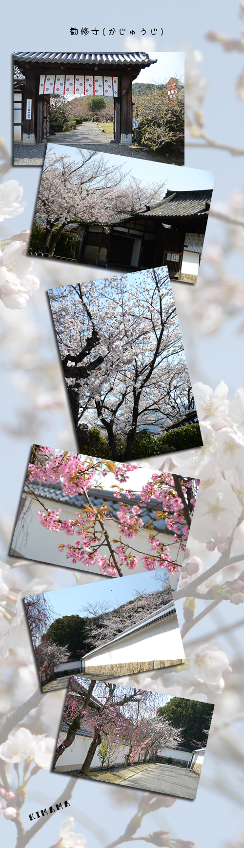 4月5日京都1