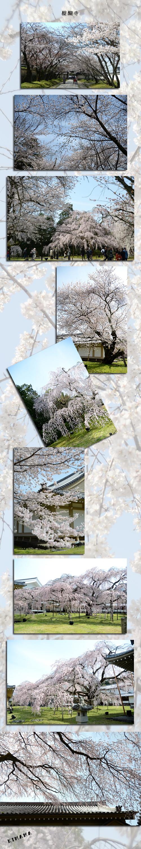 4月5日京都2