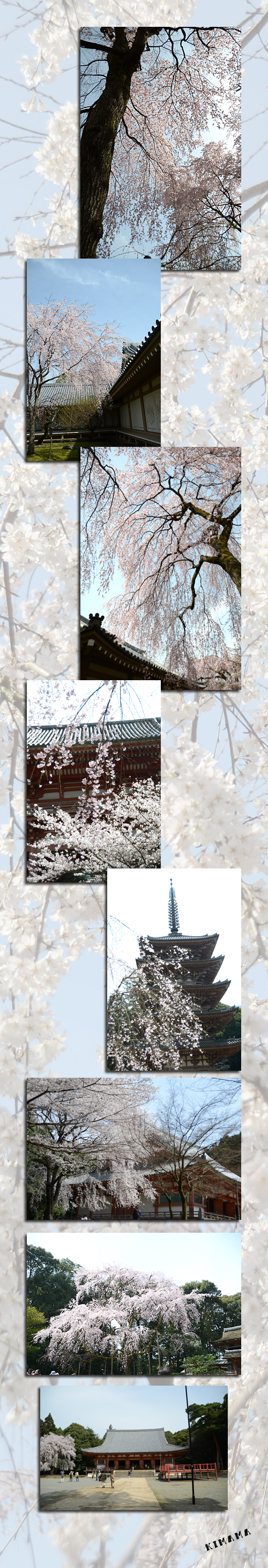4月5日京都3
