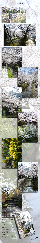 4月6日京都1
