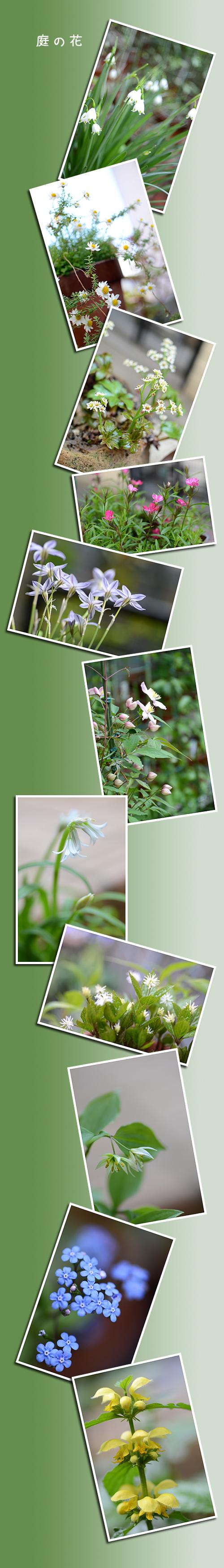 4月13日庭の花1