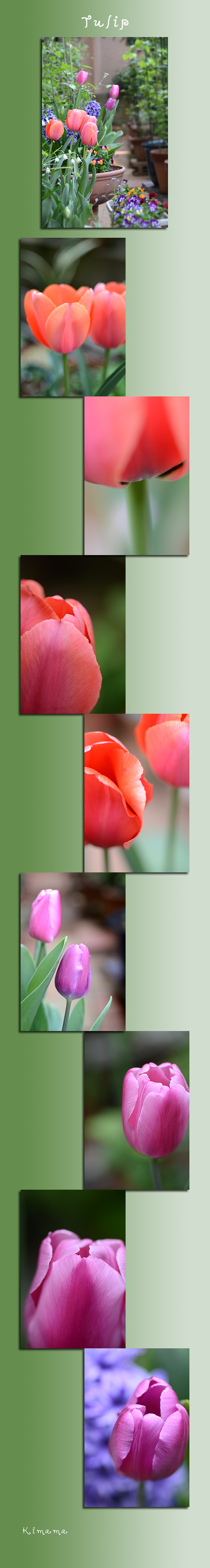 4月13日庭の花2