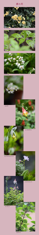 4月18日庭の花1
