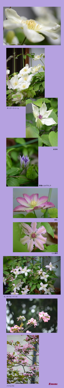 4月18日庭の花2