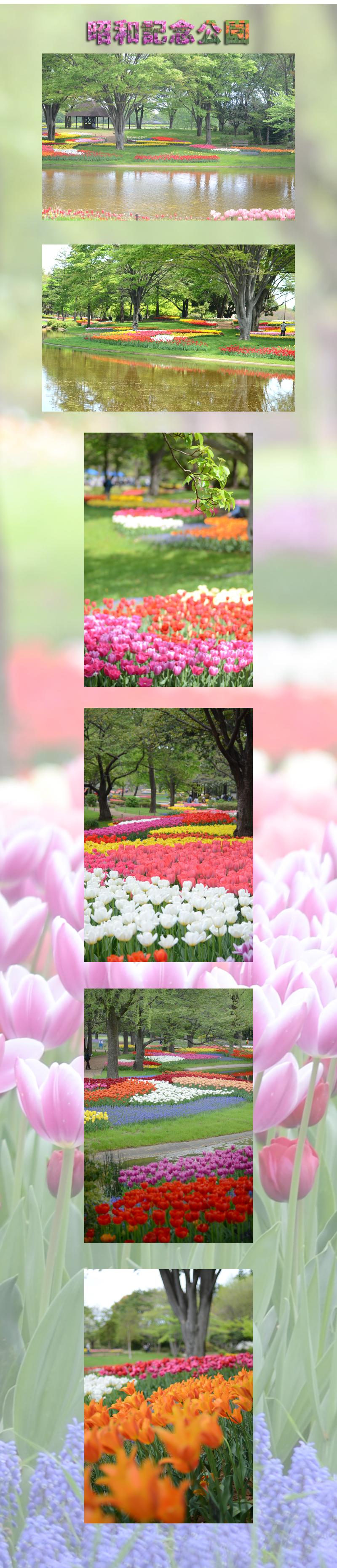 4月22日昭和記念公園1