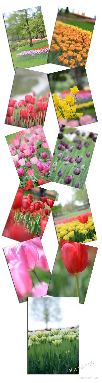 4月22日昭和記念公園3