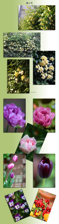 4月28日庭の花2