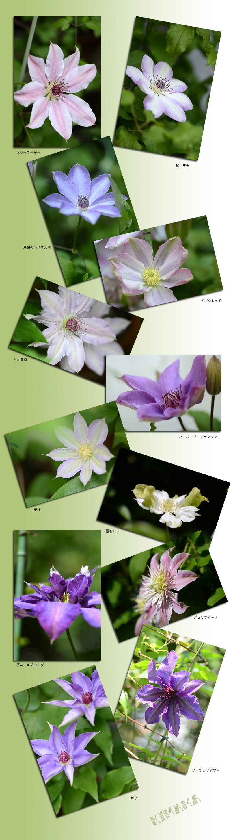 4月28日庭の花3