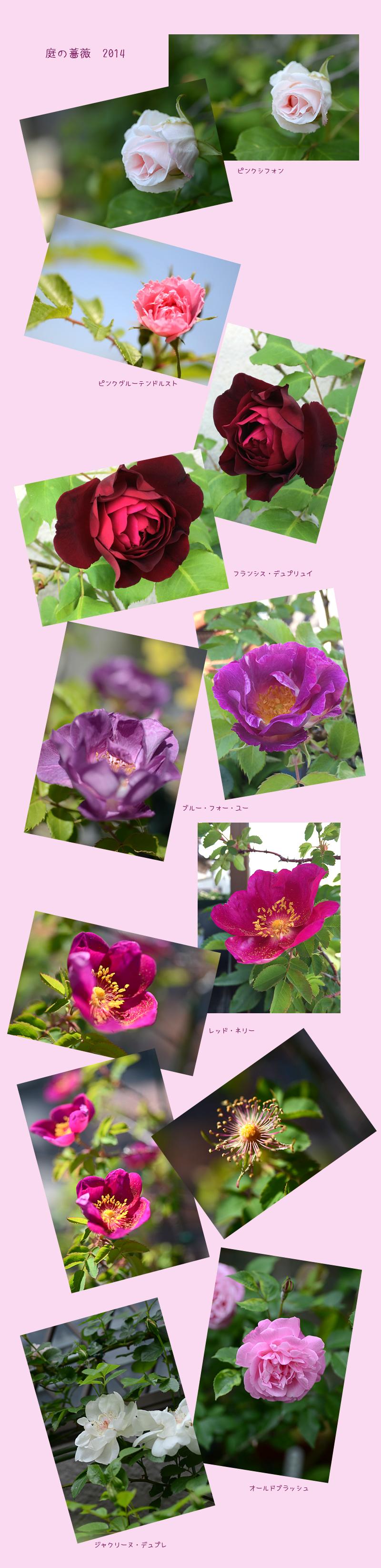 5月4日庭の花2