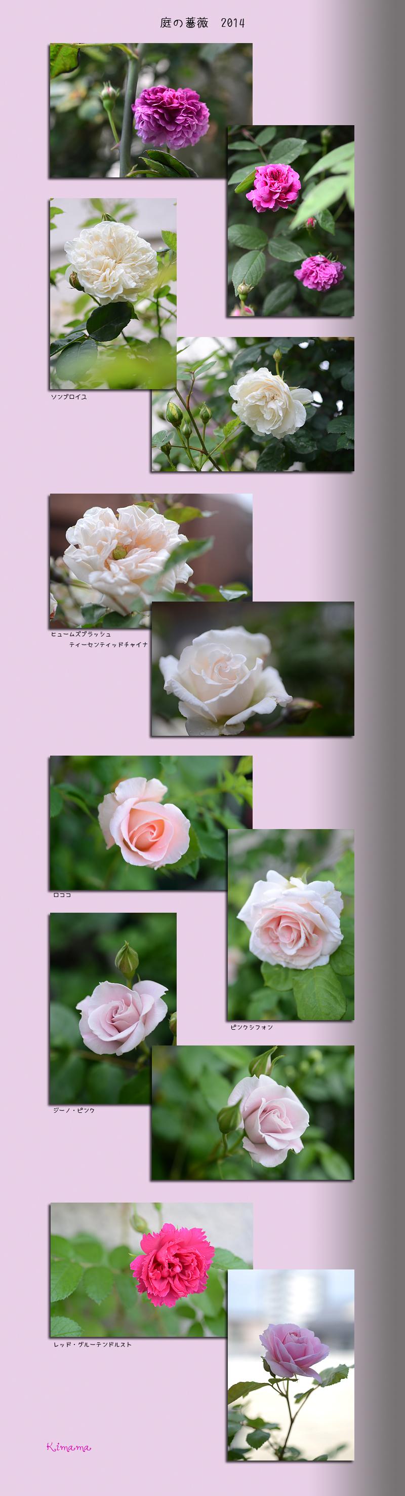 5月8日庭の花1