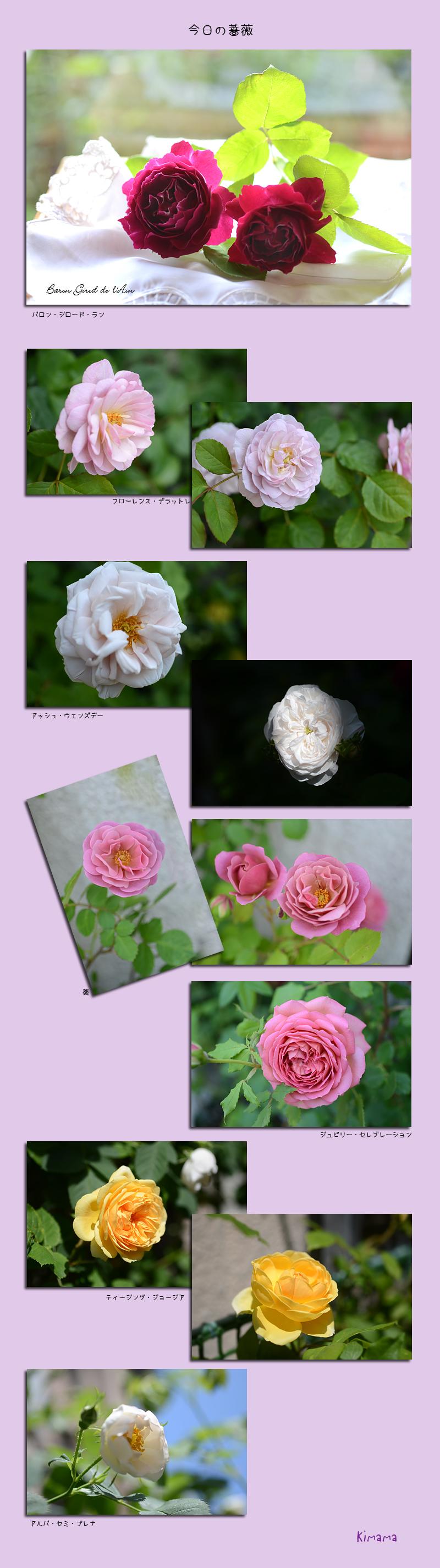 5月11日庭の薔薇