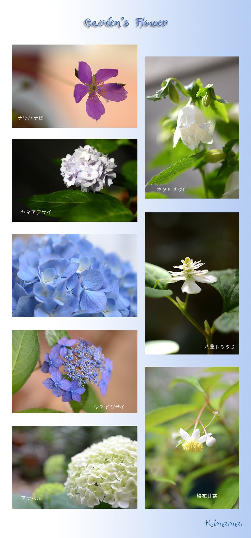 6月13日庭の花