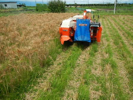 麦刈り (4)