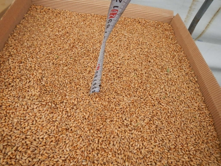 麦乾燥 (2)