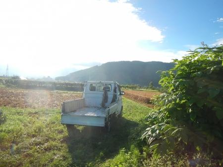 ライ麦収穫 (1)