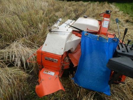 ライ麦刈り取り (1)