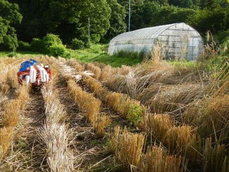 ライ麦刈り