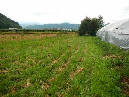 麦刈り (8)