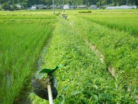 田んぼの草刈り (1)