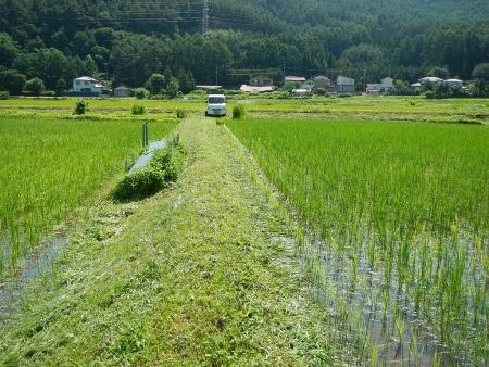 田んぼの草刈り (2)
