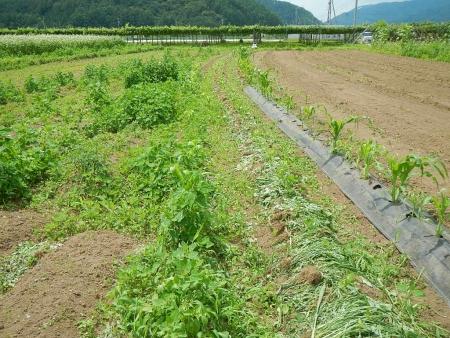 草取り作業