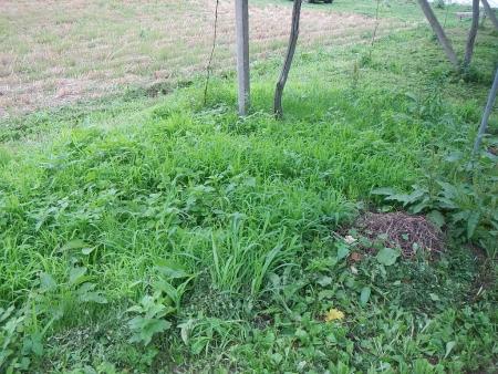 草刈り作業 (7)