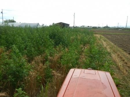 麦刈後の耕起作業 (7)