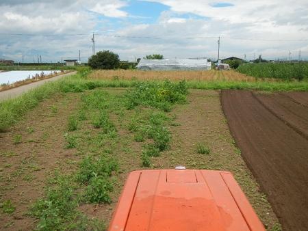 麦刈後の耕起作業 (5)