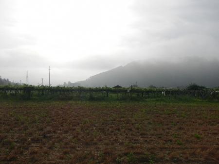 麦刈後の耕起作業 (2)
