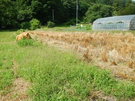 かえで農場耕起作業 (1)