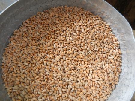 うどん用の製粉作業 (1)