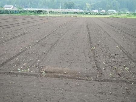 トラクターの耕起作業 (4)